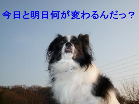 a1_20081231203855.jpg