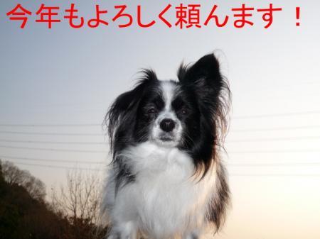 a2_20081231215254.jpg