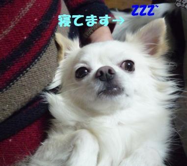 a9_20090114233250.jpg