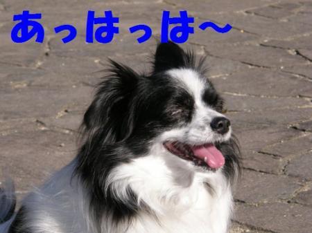 b1_20090219220931.jpg