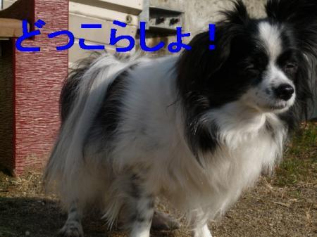 b3_20090211225316.jpg