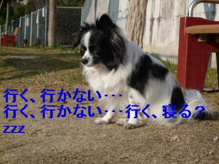 b6_20090211225342.jpg