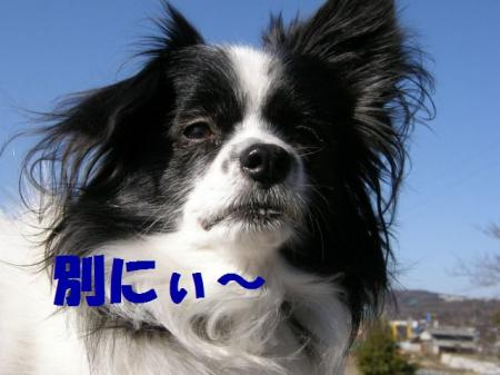 b7_20090219221026.jpg