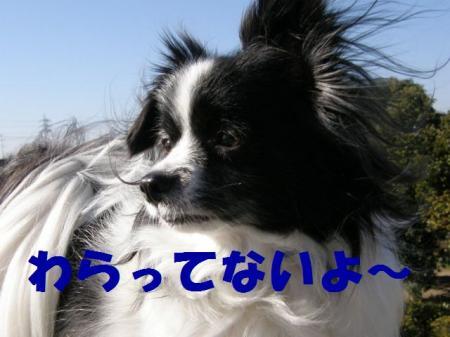 b8_20090219221036.jpg