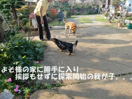 011_convert_20091031213804[1]
