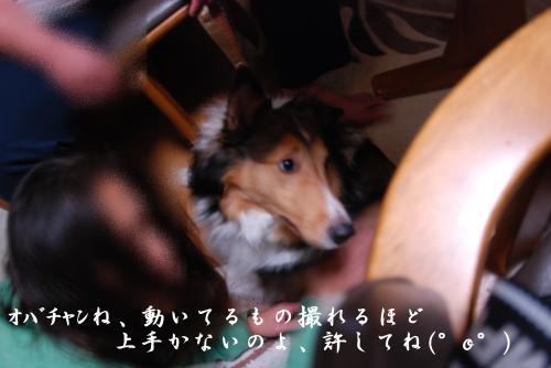 縺ヲ_convert_20101115192314[1]