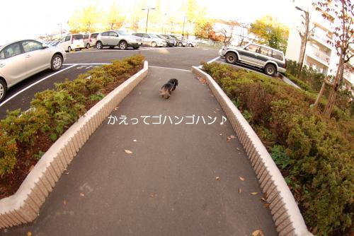 縺ャ_convert_20101121174738[1]