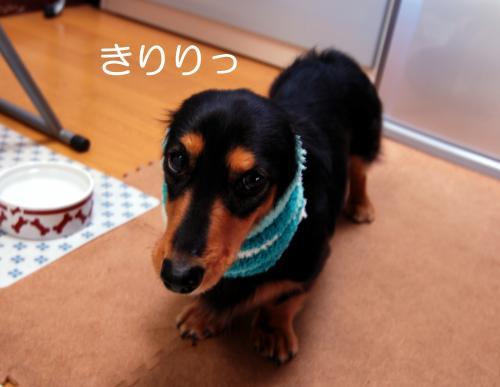 縺祇convert_20101127104833[1]