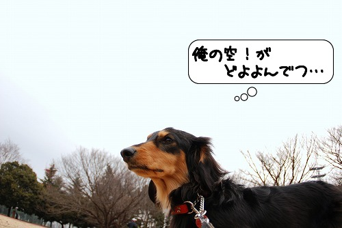 20110221_093956[1]