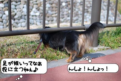 20110301_104921[1]