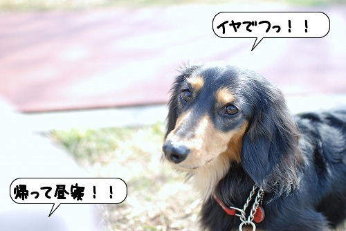 20110301_110011[1]