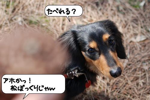 20110309_083520[1]