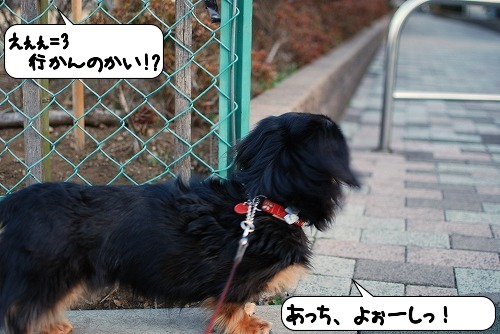 20110318_095349[1]