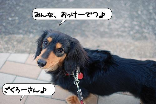 20110318_095941[1]