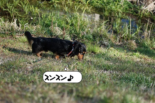 20110328_095018[1]