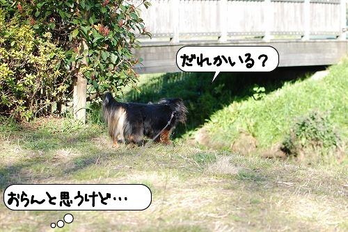 20110328_094259[1]