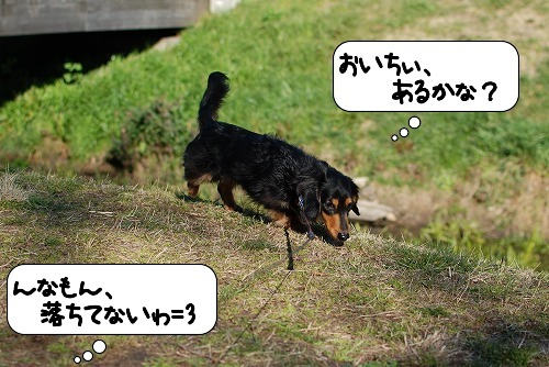 20110328_095157[1]