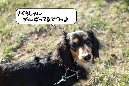 20110405_091819[1]