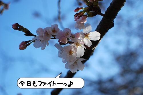 20110405_091942[1]