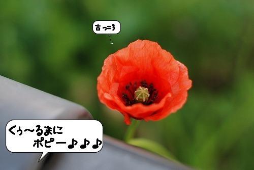 20110406_093331[1]