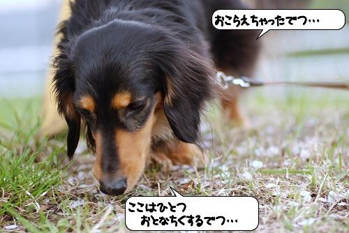 20110412_094325[1]