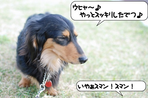 20110415_093518[1]