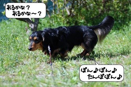 20110418_084654[1]