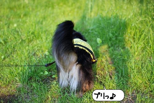 20110520_093146[1]