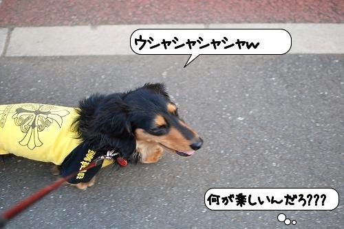 20110520_093357[1]