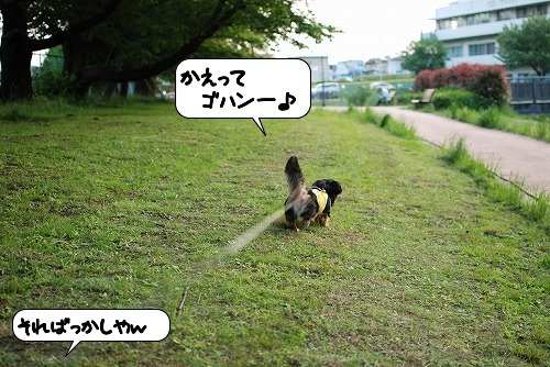 20110520_094704[1]