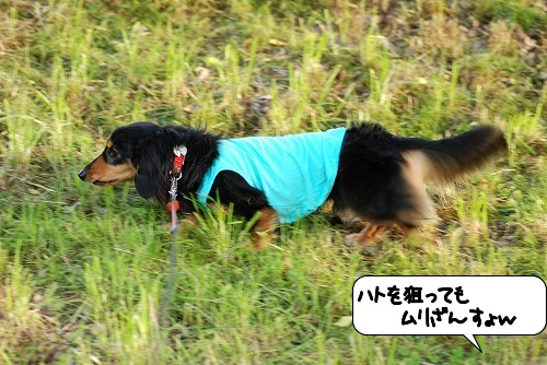 20110525_093219[1]