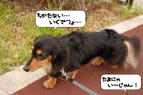20110606_093108[1]