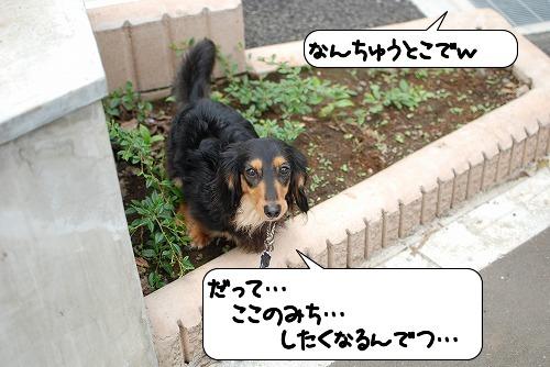 20110613_111250[1]