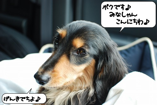20110620_141836[1]
