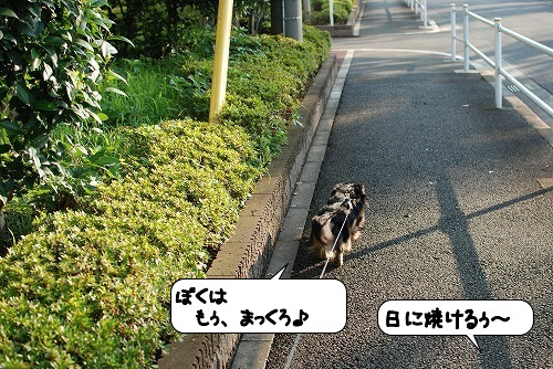 20110706_110844[1]