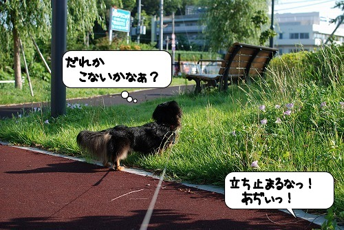 20110712_103218[1]
