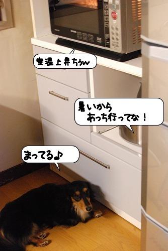 20110713_113839.jpg