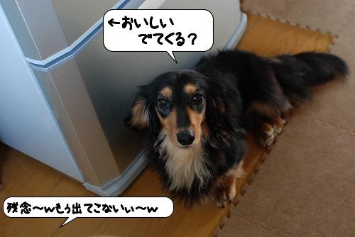 20110713_114230.jpg