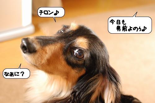 20110722_115114.jpg