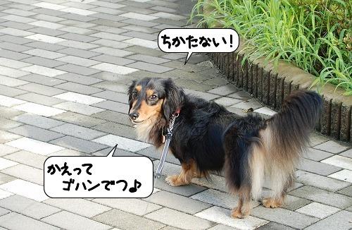 20110804_130648.jpg