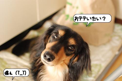 20110809_114402.jpg