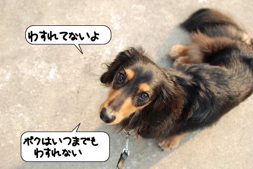 20110811_130758.jpg