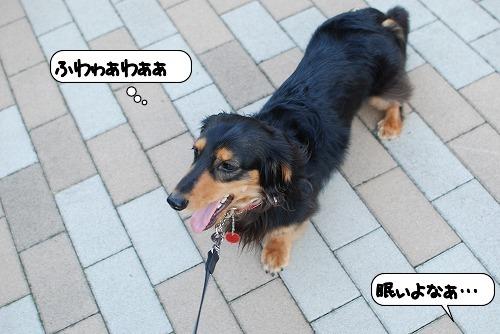 20110812_133038.jpg