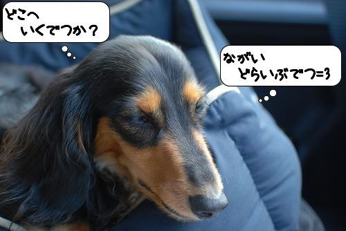 20110817_090838.jpg