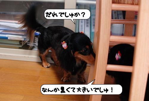 20110818_111420.jpg
