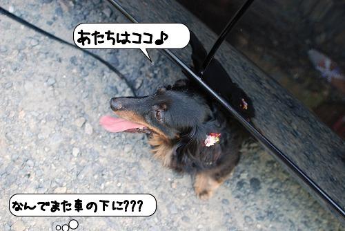 20110819_133346.jpg