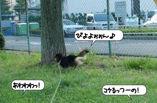20110830_110457.jpg