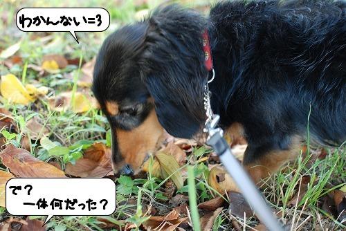20110830_110627.jpg