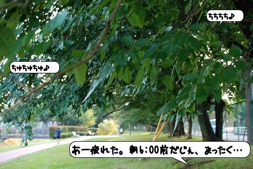 20110830_110929.jpg