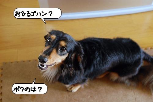 20110905_133800.jpg
